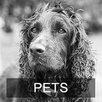 Pet Photography & Dog Photography Galleries