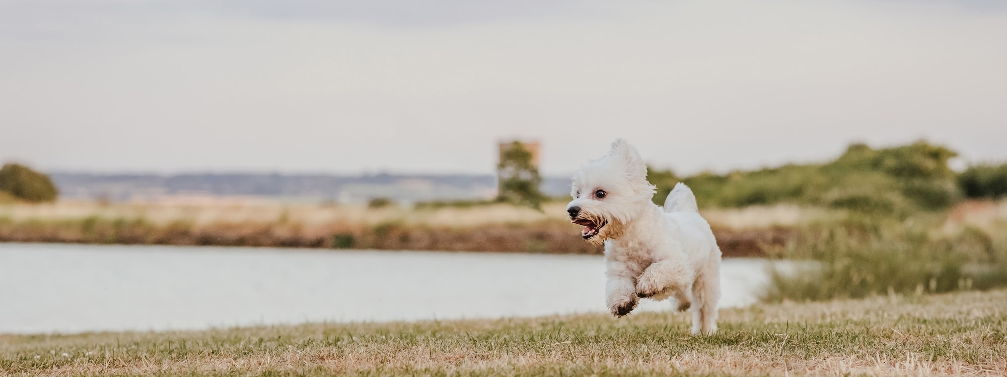 Action Shot of Dog Running by Lake at Coalhouse Fort Tilbury, Essex