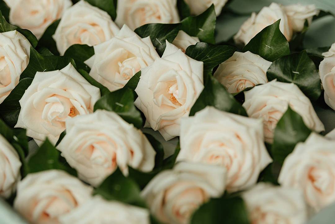 Bloomsbuy Flowers Cream Rose Buttonholes