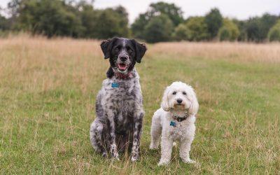 Harlow Dog Photography & Pet Photography | Arnie & Teddy