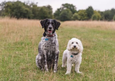 Cute portrait of two dogs together