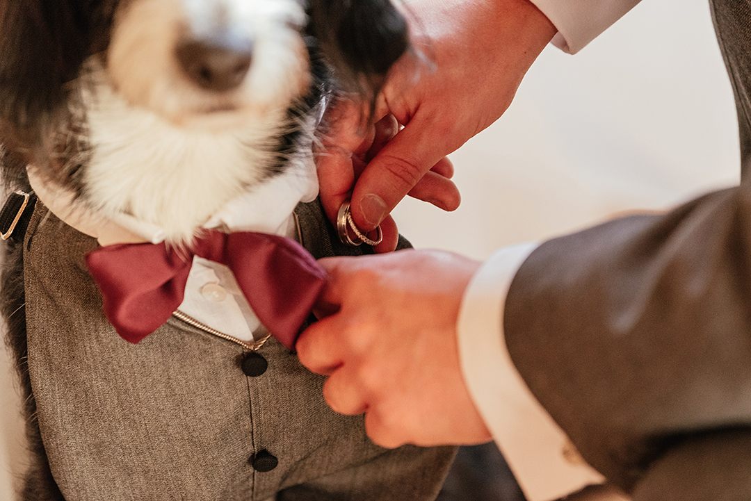 Buzz the Dog as Ring Bearer, as Groom takes rings from dog's suit pocket Colville Hall