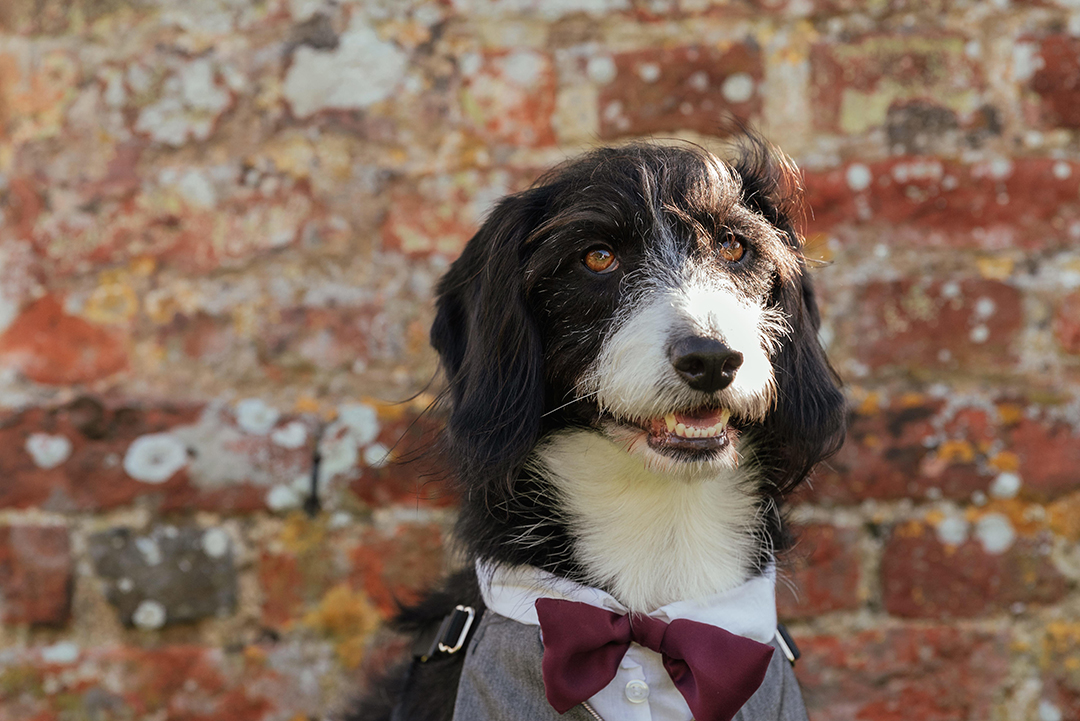 Dog Portrait at Colville Hall Wedding