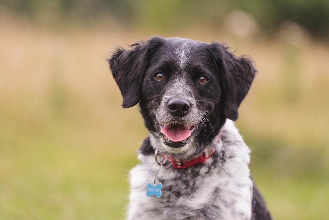 Cute portrait of a dog