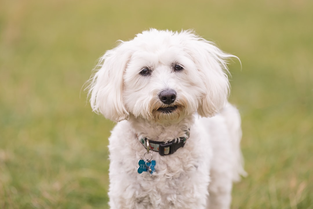 Cute close up portrait of dog