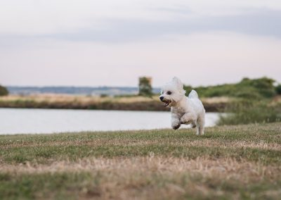 Action Photography Shot of Puppy Running