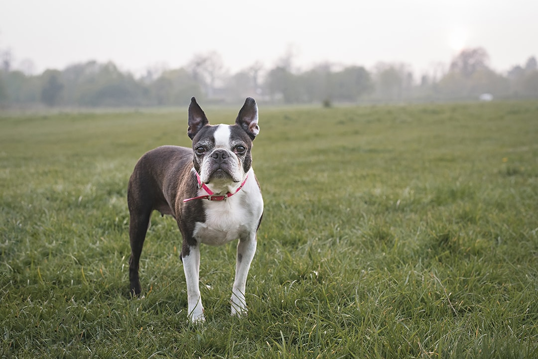Cute dog photo session in Harlow, Essex