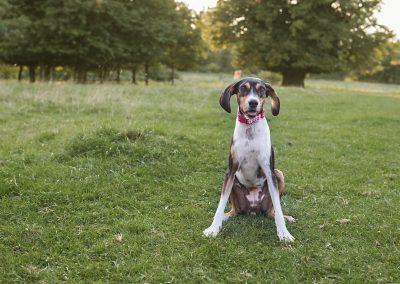 Full length portrait of dog at Pishiobury Park Essex